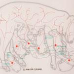 Diego del Pozo. 'Función cerebral'