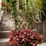 jardinière fleurie avec tressage en osier vivant début  août