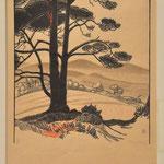 Burnot, le grand pin