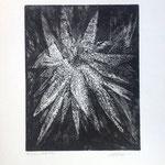 R. Bord, Etoile de mer, 1981, eau forte et aquatinte, 39 x29.
