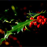 Herbst – Metzerlen SO