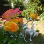 Rose Gartenspass/Aufnahme Garten/Blumen und Pflanzen