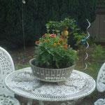Blumentopf im Garten