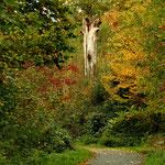 Der Waldweg hinter dem Haus