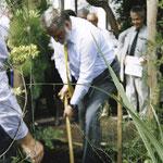 Ich pflanze eine Akazie im Botanischen Gartenin Jena
