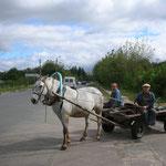 Pferdefuhrwerk in der Nähe von Kiew, 2006