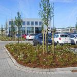 Schiller Gartengestaltung - Garten und Landschaftsbau Cuxhaven - Gewerbekunden - Referenzen