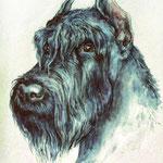 """Портрет Шона. Роскошный пёс. Самое ужасное, что иногда приходится добавлять слово """"был"""". Акварель формата А2."""