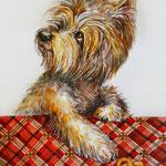 Я очень люблю жесткошёрстных терьеров всех пород! И часто рисую их в своё удовольствие. Этот портрет керна продаётся. Акварель формата А3.