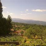 Hügeliges, grünes Land