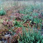 Die Vegetation lässt das rauhe Klima von Galicien erahnen.