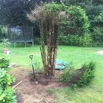 Baum entfernung