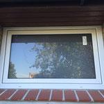 Fenster erneuert (nachher)