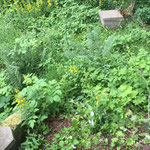 Garten pflege