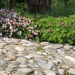 Robuste bodendeckende Blütenstauden verringern den Pflegeaufwand