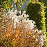 Der Herbst ist die Zeit der Gräser