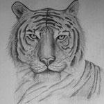 Una tigre di Barbara Carminati