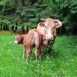 Pâturage au Gazon vert, Vosges, Alsace