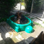 Kole beim baden
