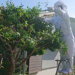 名古屋市瑞穂区で庭師さんが蜂に刺された巣を除去