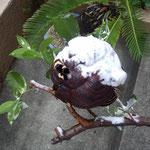 名古屋市千種区で蜂の巣を除去