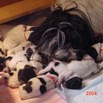 Lilli (mit rosa Bändchen) u. ihre 9 Geschwister