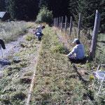 Jät- und Mäharbeiten Pflanzgarten