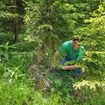 Forstarbeiten im Chöpfliwold