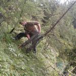 Baumschutz Gitterhüllen entfernen, Forst