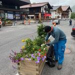 Blumenpflege im Zentrum