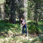 Waldschonungen einzäunen