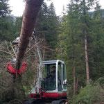 Forstaufräumarbeiten Zug/Birchet