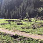Holzarbeiten Zug/Birchet, mit Holder C70 SC und Winde