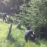 Forstarbeiten, Drahtgitter entfernen