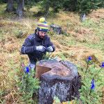 Wildverbissschutzmanschetten höher setzen