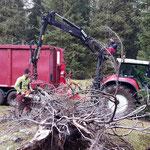 Forstarbeiten Spullerwald