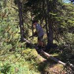 Wegebau Spullerbachweg NEU