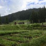 Pflanzgarten aufräumen und mähen...