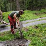 Rinnen putzen Forstwege