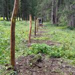 Bescheiderfüllung Ausgleichsfläche Waldbad Lech Engerle Wald, Wildschutzzaun errichten