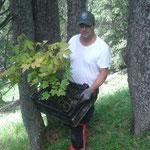 Aufforstung - Setzen von Jungbäumen gemäß BH-Bescheiden