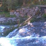 Lechweg-Instandsetzung: Baumfällarbeiten für Brückenbau