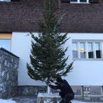 Christbaum für Weihnachtsmarkt Lech am Kirchplatz aufstellen