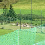 Rasen- und Umfeldpflege Fußballplatz