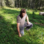 Forstarbeiten, Setzlinge pflegen