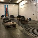 Lechbach-Steine für Kunsthaus Bregenz waschen...