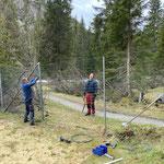 Zauninstandsetzungsarbeiten im Waldbad, Schneeschäden