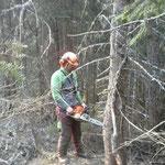 Waldschonung Rud Bühel ausholzen