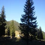 Christbaum-Suche im Älpele