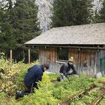 Unkraut jäten im Pflanzgarten